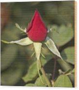 Single Bright Red Rose Bud Wood Print
