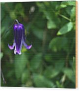 Single Clematis Bell Blossom Wood Print