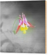 Single Columbine Wood Print