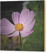Single Cosmos Wood Print