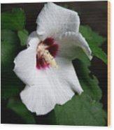 Single Rose Sharon Flower Wood Print