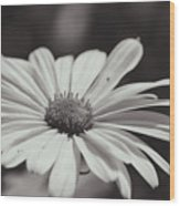 Single Daisy Bw Wood Print