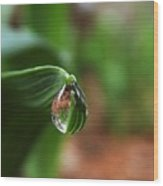 Single Drop Of Rain Water  Wood Print