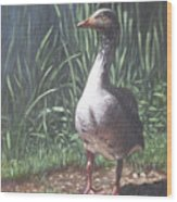 Single Goose Wood Print