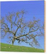 Single Oak Tree Wood Print