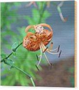 Single Orange And Black Tiger Lily Wood Print