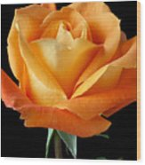 Single Orange Rose Wood Print