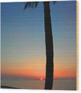 Single Palm And Sunset Wood Print