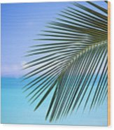 Single Palm Frond Wood Print