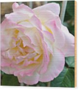 Single Peace Rose Wood Print