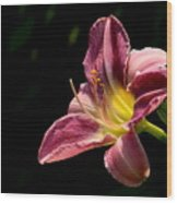 Single Pink Day Lily Wood Print