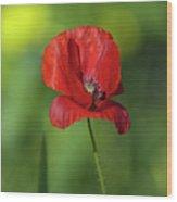 Single Poppy On Green Background Wood Print