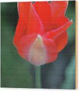 Single Red Wood Print