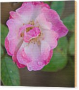 Single Rose 2 Wood Print