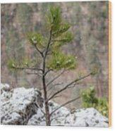 Single Snowy Pine Wood Print
