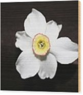 Single Spring Flower Wood Print