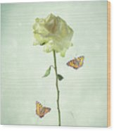 Single Stem White Rose Wood Print