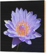 Single Water Lily Wood Print