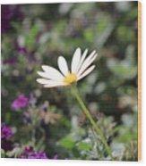 Single White Daisy On Purple Wood Print