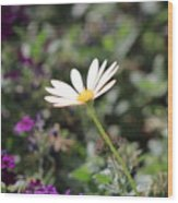 Single White Daisy On Purple Wood Print