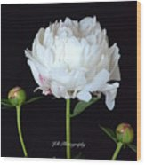 Single White Peony Wood Print