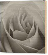 Single White Rose - 2 Wood Print