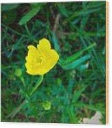 Single Yellow Buttercup Wood Print
