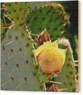 Single Yellow Cactus Bloom 050715a Wood Print