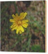 Single Yellow Flower Wood Print