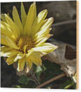 Single Yellow Mum Wood Print