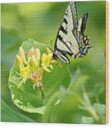 Sipping Swallowtail Wood Print