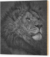 Sir Lion Wood Print