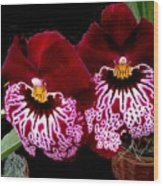 Sister Orchids Wood Print