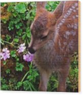 Sitka Black-tailed Fawn Wood Print