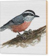 Sitta Canadensis Wood Print