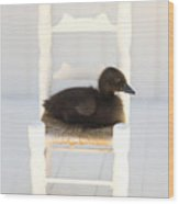 Sitting Duck Wood Print by Amy Tyler