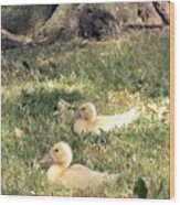 Sitting Ducks Wood Print