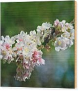 Sitting Guard In The Cherry Blossoms Wood Print