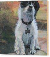 Sitting Pretty - Black And White Puppy Wood Print