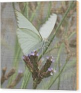 Sitting Pretty, Cabbage White Butterfly Wood Print