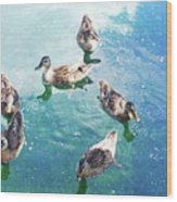 Six Ducks Swim Together Wood Print