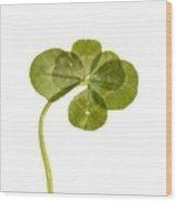 Six Leaf Clover 1 Wood Print