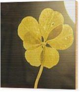 Six Leaf Clover In Studio 2 Wood Print