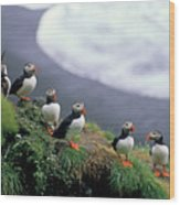 Six Puffins Perched On A Rock Wood Print