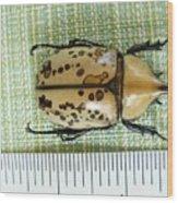 Size Of Hercules Beetle Wood Print