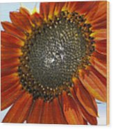 Sizzling Hot Sun Flower Wood Print