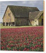 Skagit Barn Wood Print