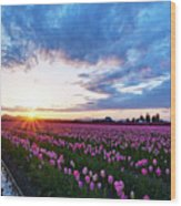Skagit Floral Sunset Wood Print