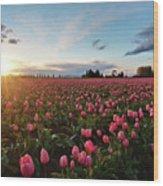 Skagit Sunset Field Wood Print