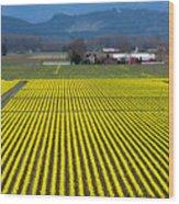 Skagit Valley In Springtime Wood Print